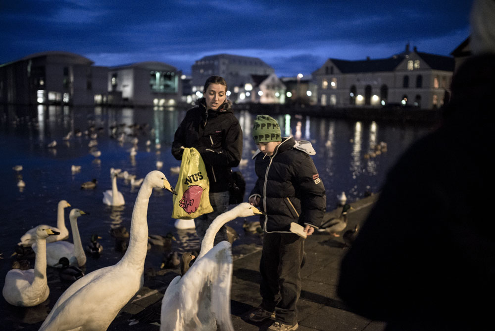 Feeding the swans in Reykjavik on an Iceland road trip