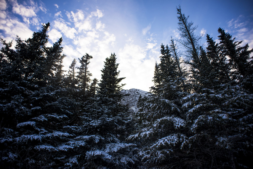 Winter treees