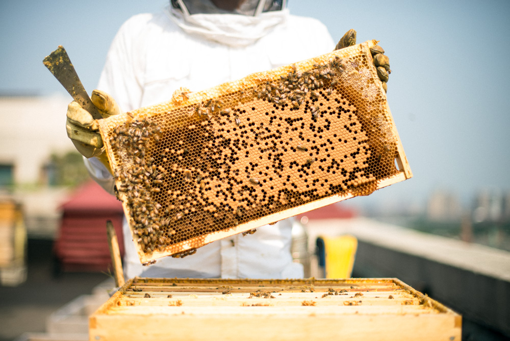 Best Bees Boston Founder Noah Wilson-Rich